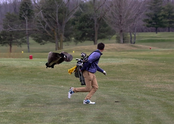 Incredible Photos Show High School Golfer Tackled by Angry Goose