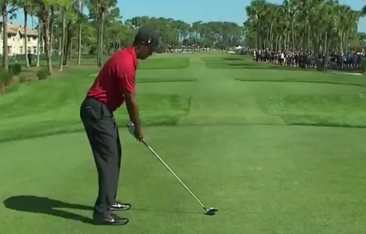 Tiger Woods hit a Goose with a Tee Shot